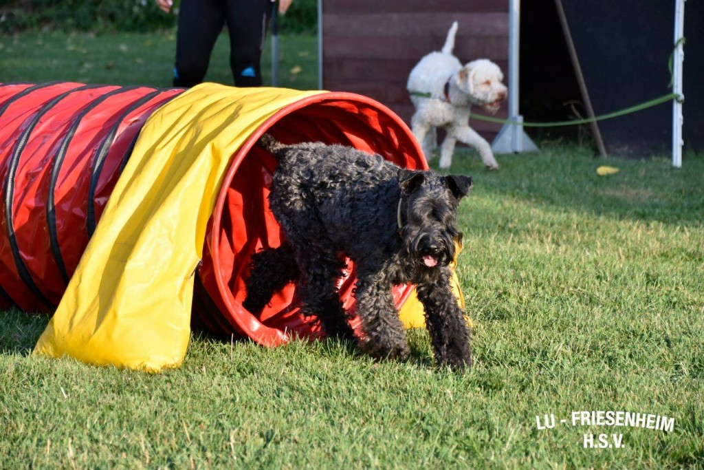 Hoopers-Agility-Kurs