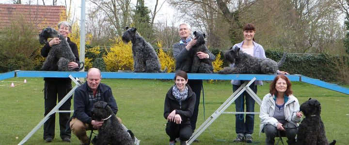 Der 1. Kerry Blue Terrier Workshop war ein voller Erfolg!